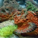 Manila Ocean Park - Rockfish